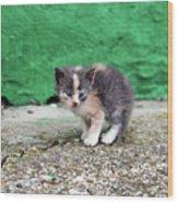 Abandoned Kitten On The Street Wood Print