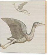 Above A Flying Crane And Beneath A Flying Pelican, Anonymous, 1688 - 1698 Wood Print