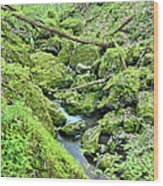 Above Moine Creek 2 Wood Print