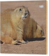 Absolutely Adorable Prairie Dog With  A Friend Wood Print