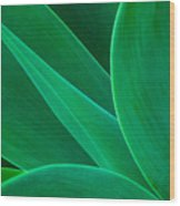 Abstract Agave Plant Wood Print