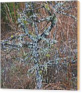 Abstract And Lichen Wood Print