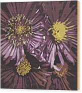Abstract Aster Flowers Wood Print