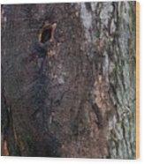 Abstract Bark 14 Wood Print