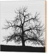 Abstract Bw Single Tree Wood Print