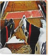 Abstract Cows Wood Print