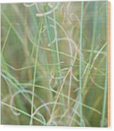Abstract Curly Grass One Wood Print
