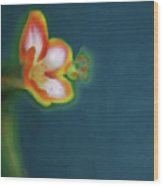 Abstract Floral Art 69 Wood Print