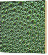 Abstract Green Alien Bubble Skin Wood Print
