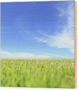 Abstract Green Field And Blue Sky Wood Print