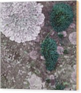 Abstract Lichen Wood Print
