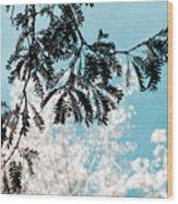 Abstract Locust Wood Print