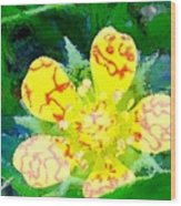 Abstract Of A Wild Buttercup Flower Wood Print
