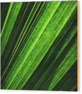 Abstract Of Green Leaf Of Exotic Palm Tree Wood Print