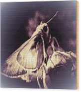 Abstract Of Skipper Butterfly Wood Print