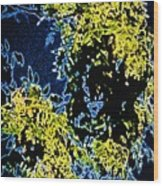 Abstract Of Tree And Leaves Wood Print