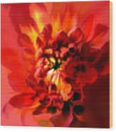 Abstract Red Chrysanthemum Wood Print