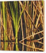 Abstract Reeds Triptych Top Wood Print
