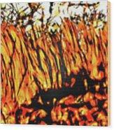 Abstract Saw Grass Iv Wood Print