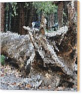 Abstract Sequoia Tree Wood Print