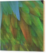 Abstractions From Nature - Pigeon Feathers Wood Print