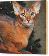 Abyssinian Cat In Christmas Tree Background Wood Print