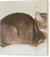 Abyssinian Cat On Chair Pillow, Symbol Of Comfort Wood Print