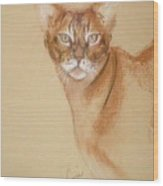 Abyssinian Wood Print