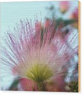 Acacia Bloom Wood Print