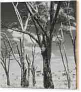 Acacia Tones Wood Print