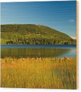 Acadia, National Park Shoreline And Marsh Maine Wood Print