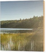 Acadia National Park Shoreline In Evening Sun Wood Print