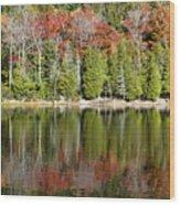 Acadia Tree Reflections Wood Print