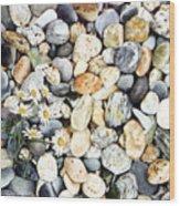 Acadian Daisies Wood Print