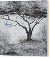 Acasia Tree Wood Print