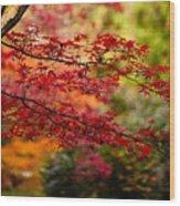 Acer Colors Wood Print