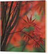 Acer Fanfare Wood Print