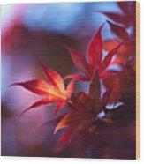 Acer Kaleidoscope Wood Print