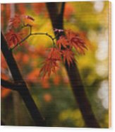 Acer Silhouette Wood Print
