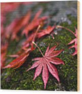 Acers Fallen Wood Print