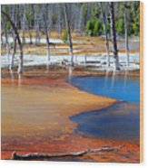 Acid Soup Yellowstone Wood Print