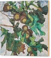 Acorns On An Oak  Wood Print