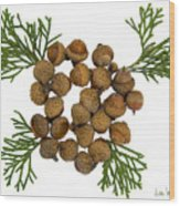 Acorns With Cedar Wood Print