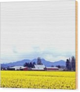 Acres Of Daffodils Wood Print