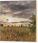 Across Golden Grass Wood Print