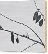 Across The Pale Sky Wood Print