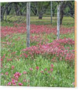 Adding A Splash Of Color-indian Paintbrush In Texas Wood Print