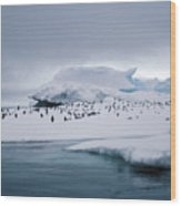 Adelie Penguins On Iceberg Weddell Sea Wood Print