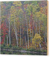 Adirondack Birch Foliage Wood Print
