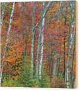 Adirondack Birches In Autumn Wood Print